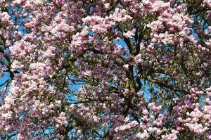 spring-211635